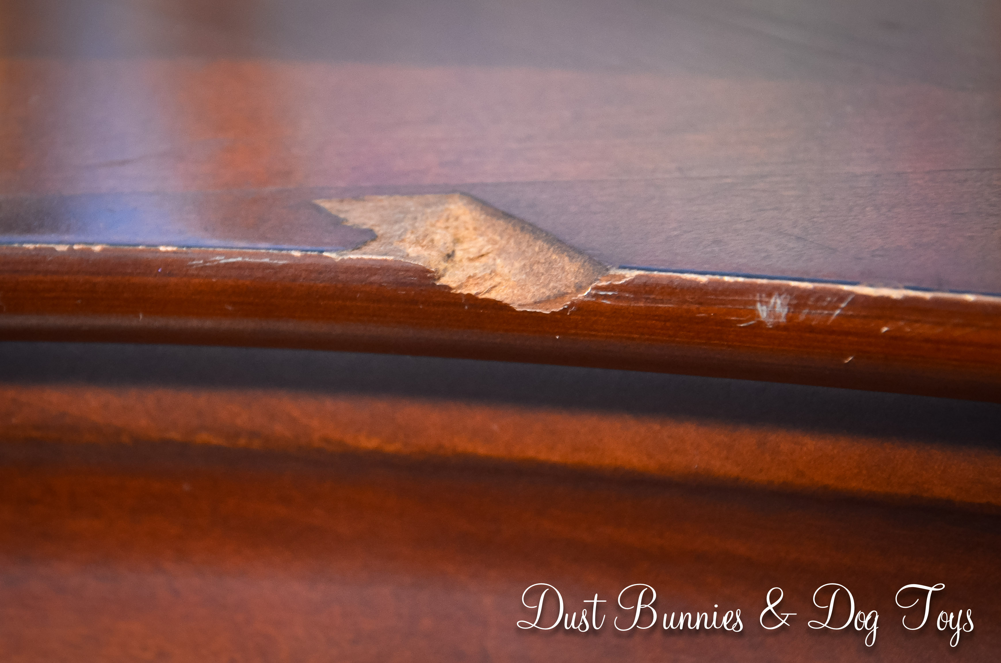 Bedroom – Dust Bunnies and Dog Toys