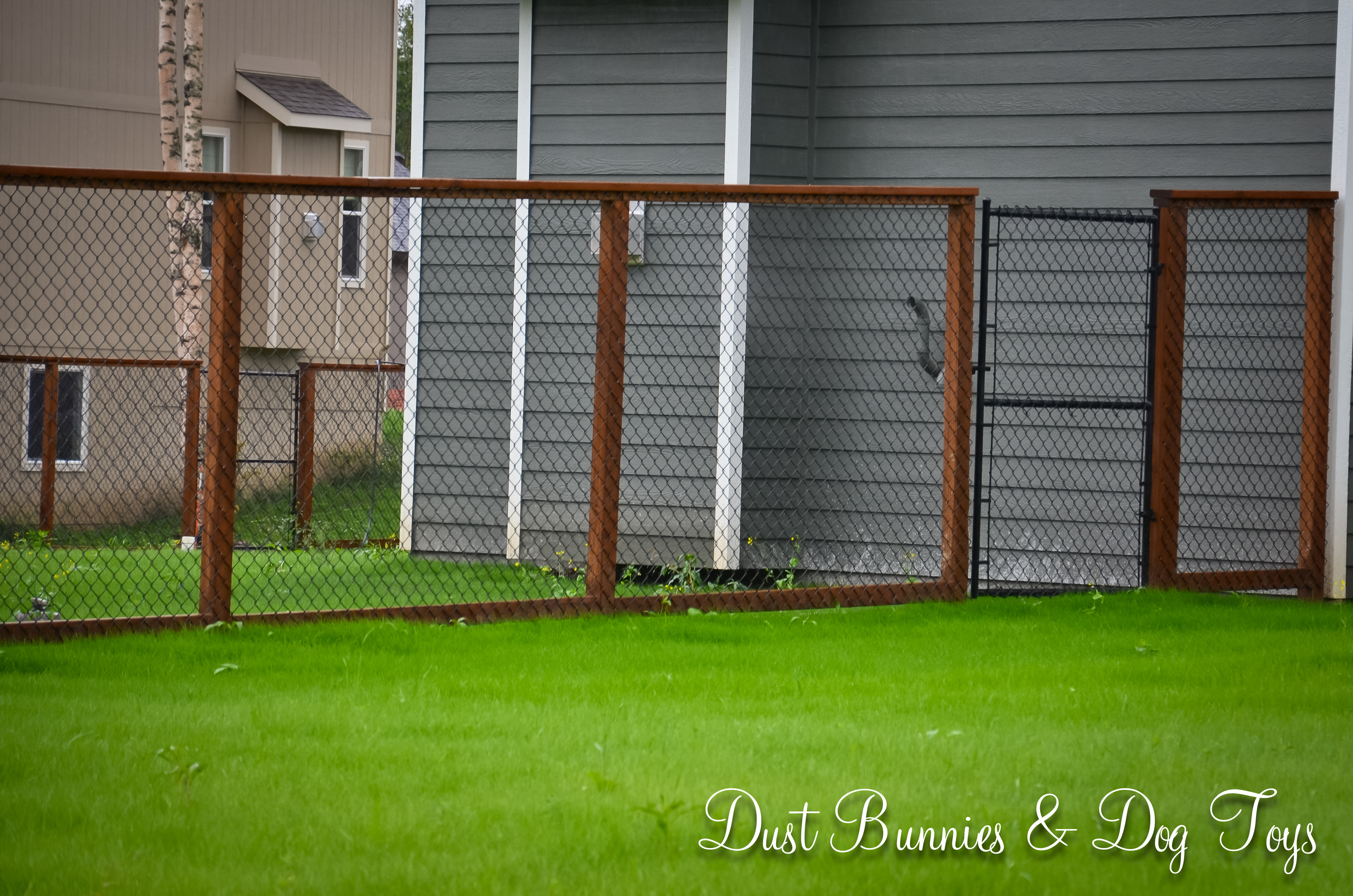 Chain Link Fencing Dust Bunnies And Dog Toys