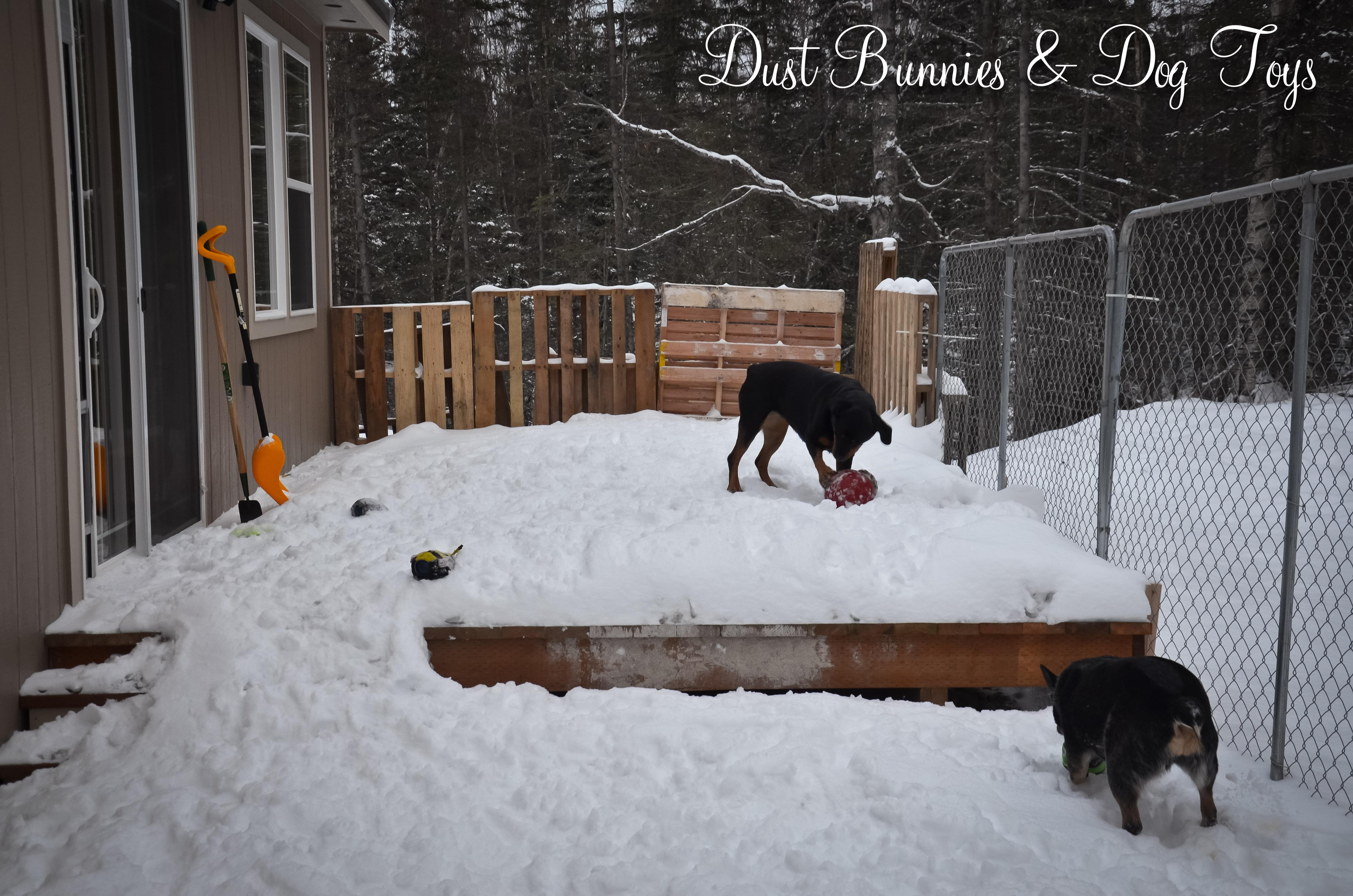 Dust Bunnies And Dog Toys