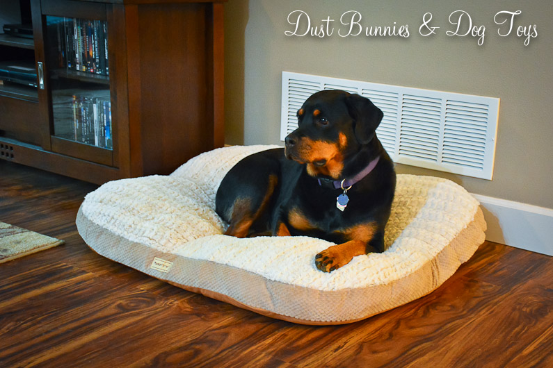 Dog Bed Dust Bunnies And Dog Toys