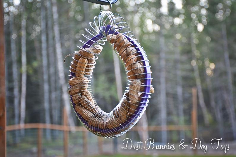 Slinky Embroidery Hoop Peanut Squirrel Feeder