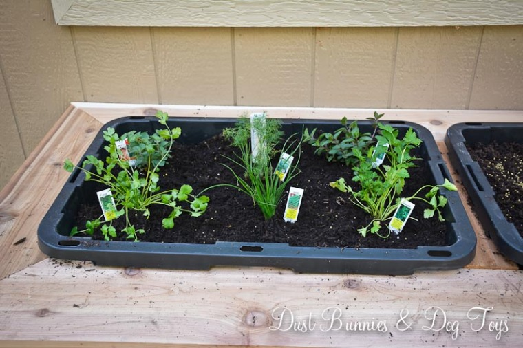 PlanterPlantedHerbs