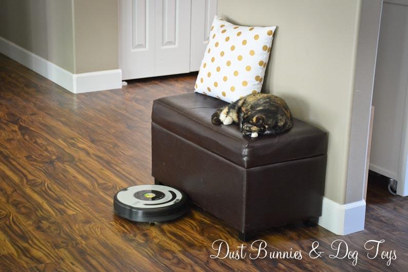 Clean House Dust Bunnies And Dog Toys