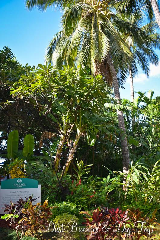 GardenBananaTree