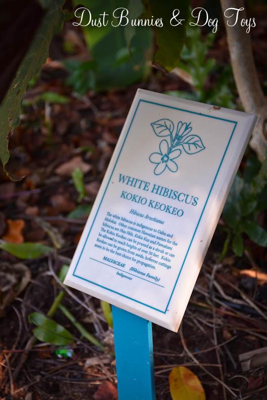 GardenHibiscusSign