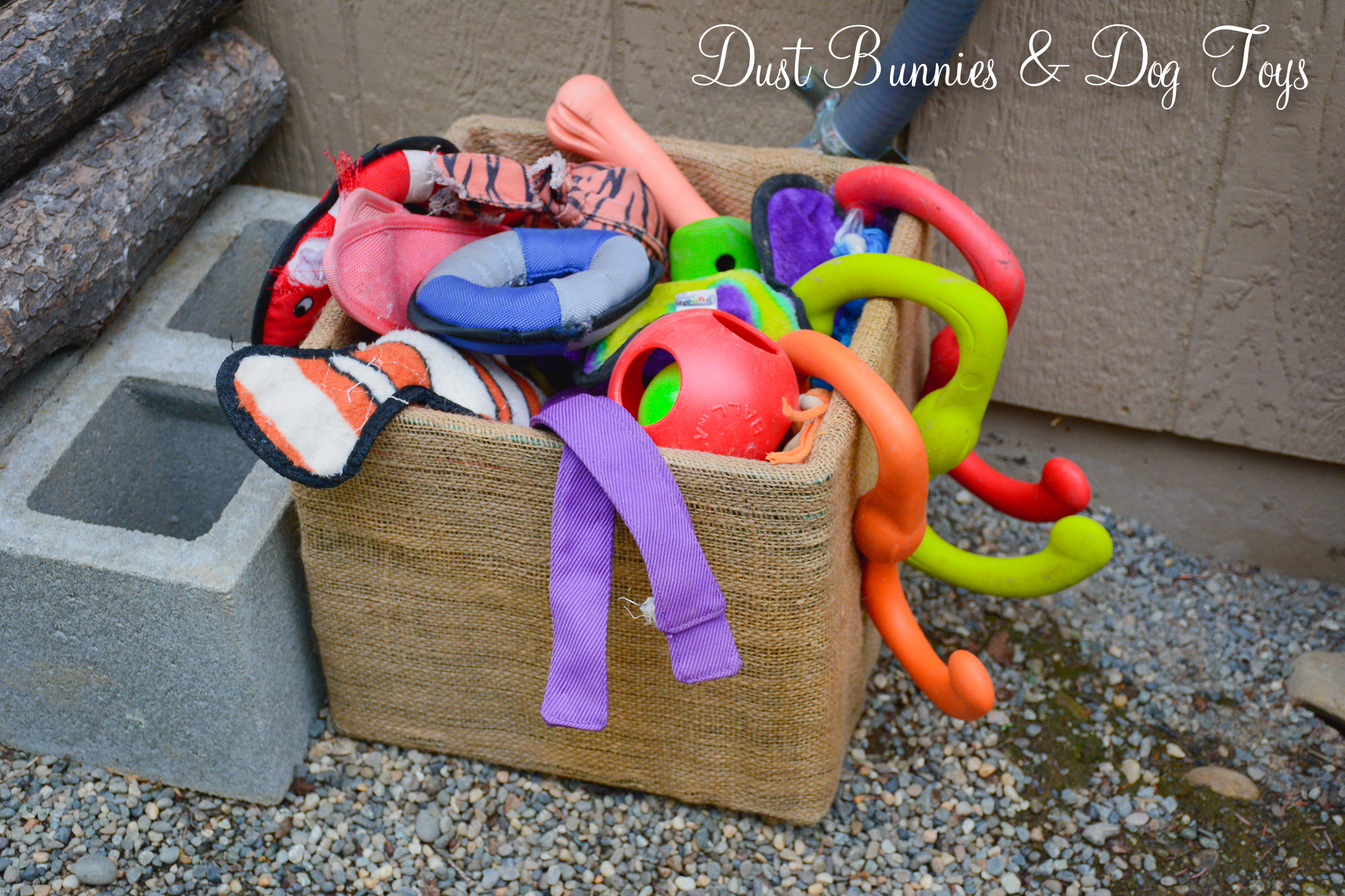 Dog Toy Box Dust Bunnies And Dog Toys